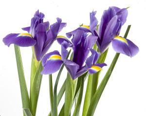 Irissen en meer