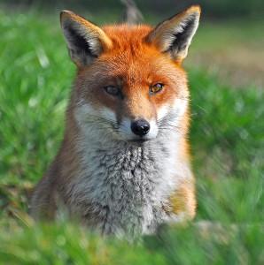 Het vreselijkste en het prachtigste wilde dier in mijn tuin