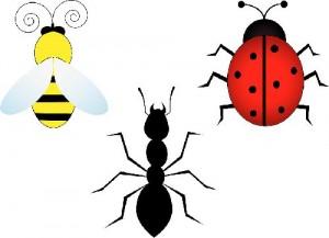 Kriebelbeestjes in de tuin