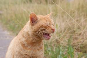 Communicatie van een kat