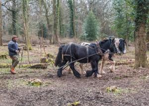 Feuilleton – 52 – Du vin, du pain, du pindakaas : De paarden die de haver verdienen, krijgen ze niet